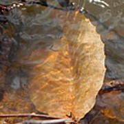 Swimming Leaf Poster