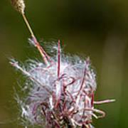 Swirling Wildflower Poster
