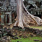 Ta Prohm Temple Ruins Poster