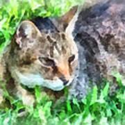 Tabby Cat Closeup Poster