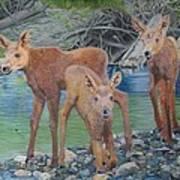 Talkeetna River Trio Poster
