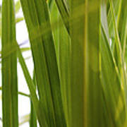 Tall Grass Poster