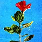 Tall Hibiscus - Flower Art By Sharon Cummings Poster