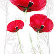 Tall Poppies Poster