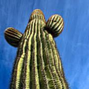 Tall Saguaro Cactus Poster