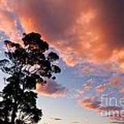 Tall Tree Against A Dramatic Sunset Clouds Sky Poster