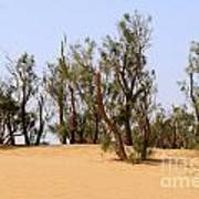 Tamarix Trees On Sand Dune  Poster by Dan Yeger