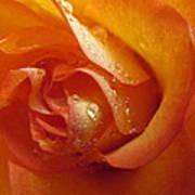 Tangerine Beauty Poster