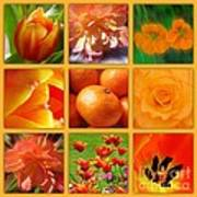 Tangerine Dream Window Poster by Joan-Violet Stretch