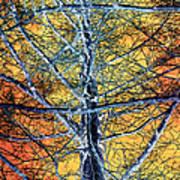 Tangled Web 2 Poster