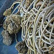 Tangles Of Seaweed Poster