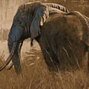 Tarangire Bull Poster by Aaron Blaise