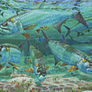 Tarpon Rolling In0025 Poster by Carey Chen