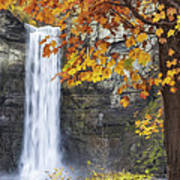 Taughannock Falls And Maple Poster