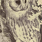Tawny Owl Poster