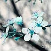 Teal Blossoms Poster