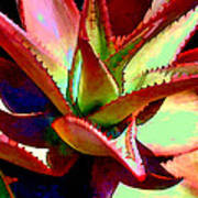 Technicolored Agave Succulent Poster