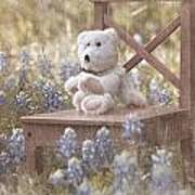 Teddy Bear And Texas Bluebonnets Poster