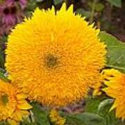 Teddy Bear Sunflower 2 Poster