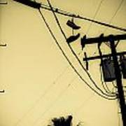 Telephone Pole 8 Poster