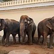 Temple Elephants Maharaja's Palace India Mysore Poster