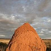 Termite Mound, Exmouth, Australia. Poster by Science Photo Library