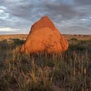 Termite Mound, Exmouth Western Poster by Science Photo Library