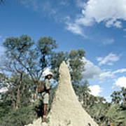 Termite Mound Poster by Mark Newman