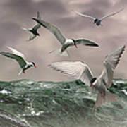 Terns Feasting At Sea Poster