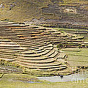 Terraces And Paddy Fields Poster