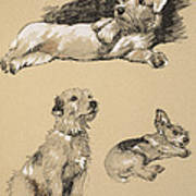 Terriers, 1930, Illustrations Poster