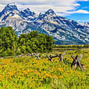Tetons In The Spring Poster