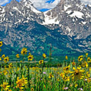 Tetons Peaks And Flowers Center Panel Poster