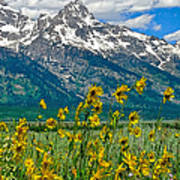 Tetons Peaks And Flowers Right Panel Poster