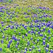 Texas Beauties Poster