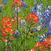 Texas Best Wildflowers Poster