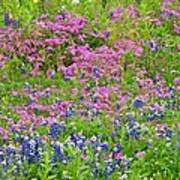 Texas Bluebonnets And Wildflowers Poster