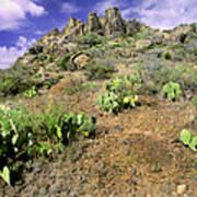 Texas Desert Poster