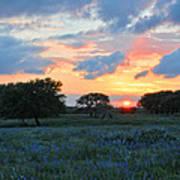 Texas Wildflower Sunset  Poster