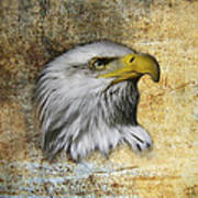 Textured Eagle  Poster