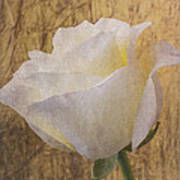 Textured Rose Poster