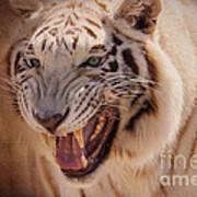 Textured Tiger Poster