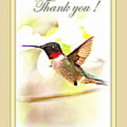 Thank You Card - Bird - Hummingbird Poster