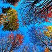 The Autumn Leaves At Potato Creek Poster