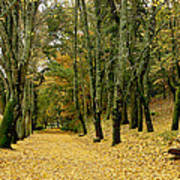 The Autumn Path Poster