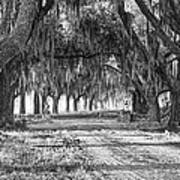 The Avenue Of Oaks Poster