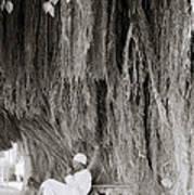 The Banyan Tree Poster