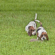 The Bassets Poster