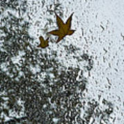 The Beauty Of Autumn Rains - A Vertical View Poster