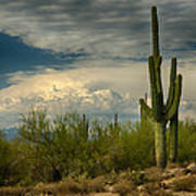The Beauty Of The Desert Southwest  Poster